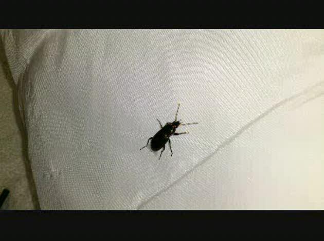黒い 小さい 虫 部屋