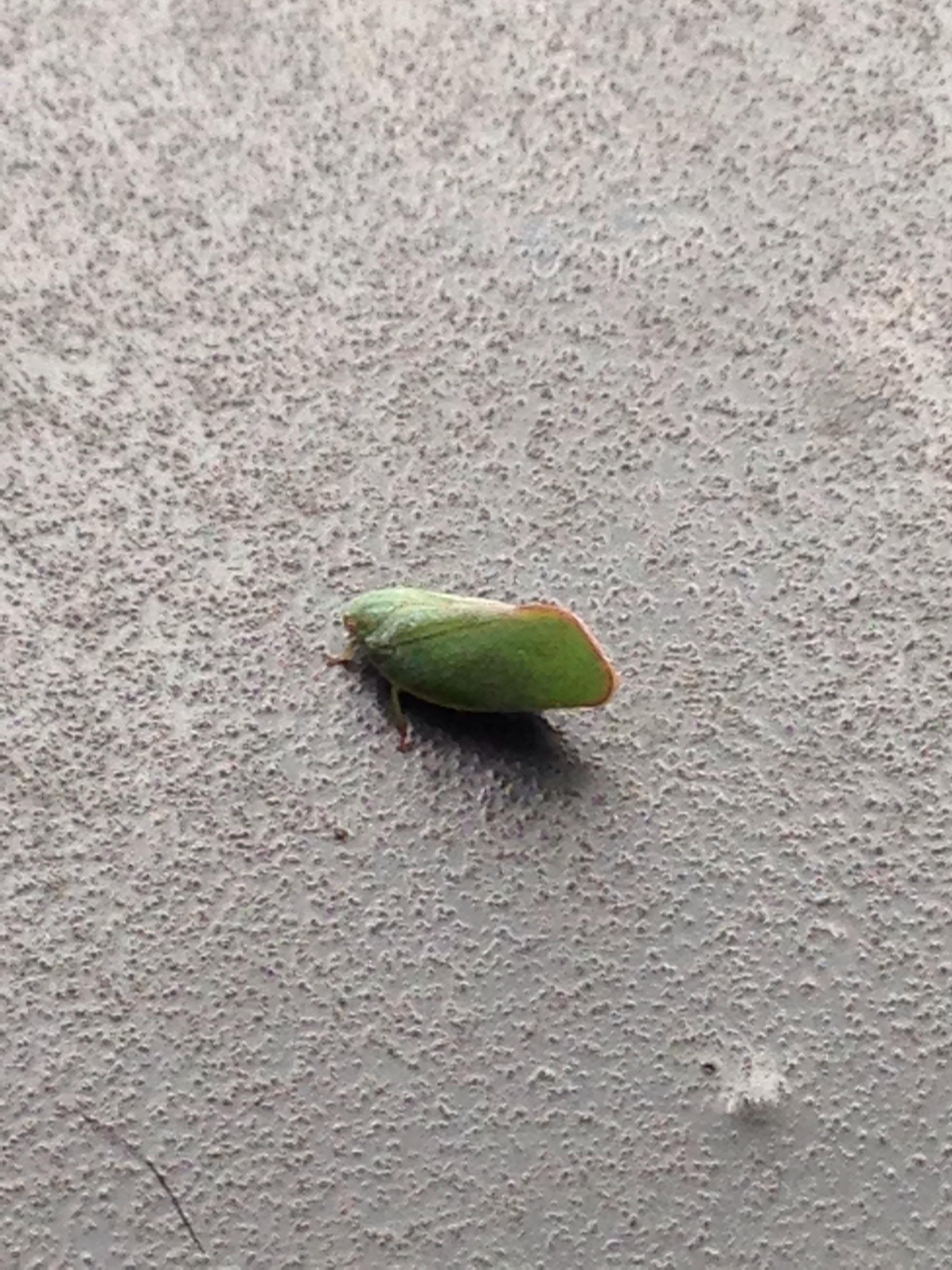 蛾 小さい